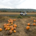 Pumpkin Riding