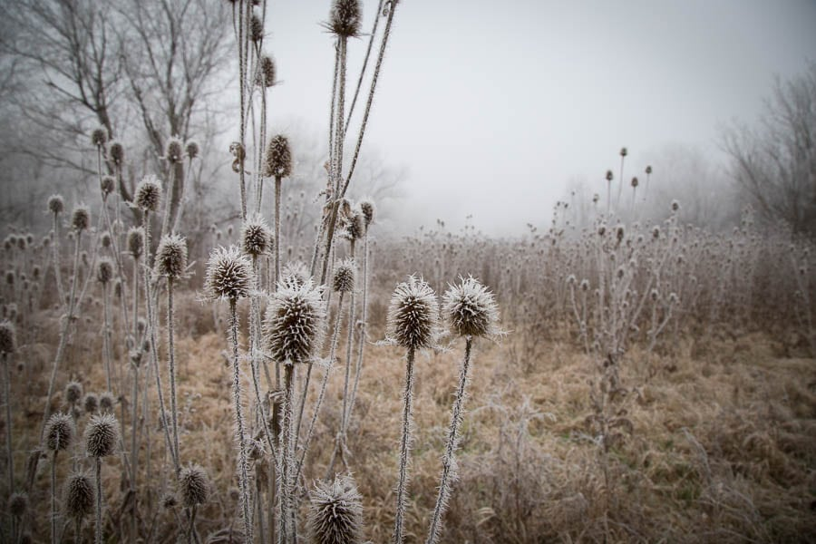 Meadow covered in ice crystals from a frozen fog