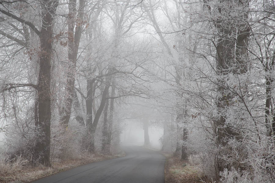 Ice covered trees forming a tunnel while riding in frozen fog