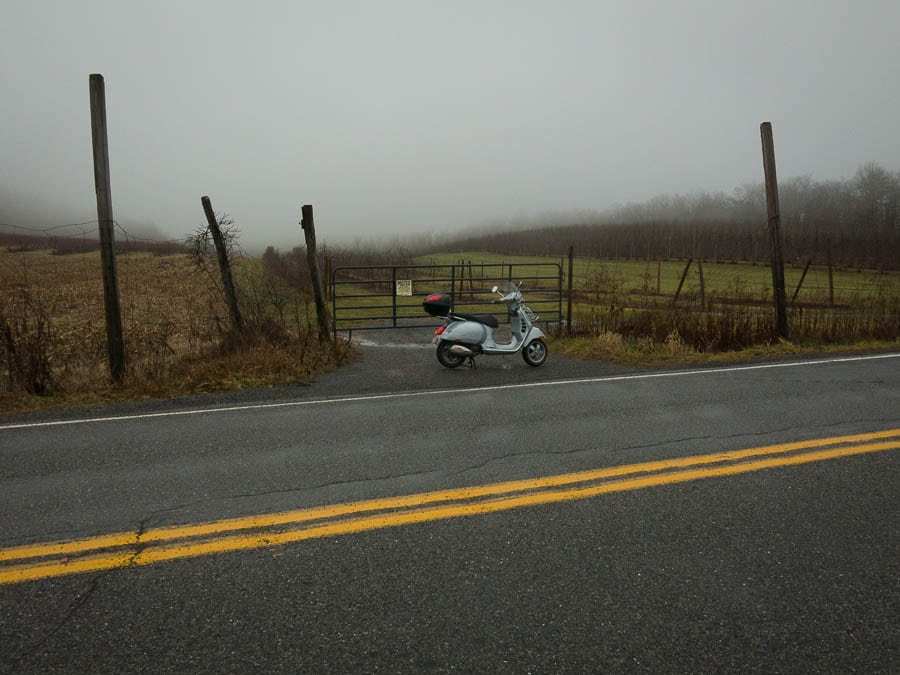 Vespa scooter and a foggy apple orchard