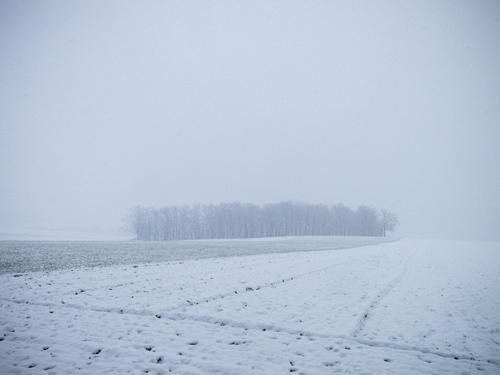 Snow covered farm field with trees
