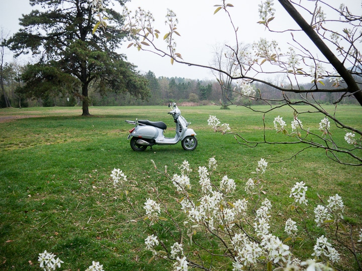 Vespa GTS and spring blossoms