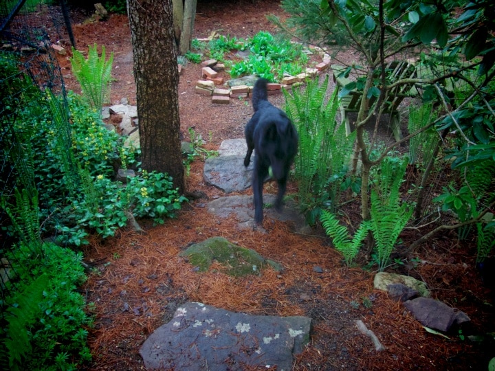 dog running through wooded garden