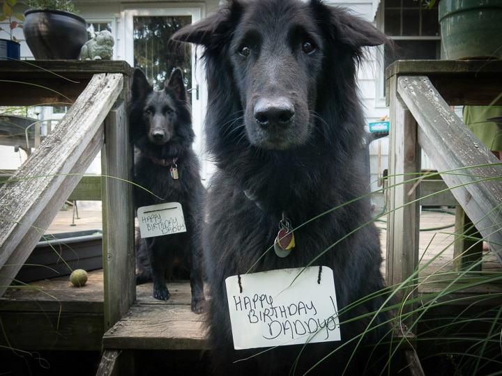 Dogs offering birthday greetings