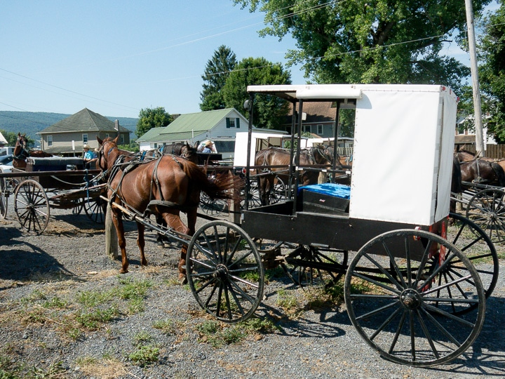 Amish buggies at Belleville Livestock Auction