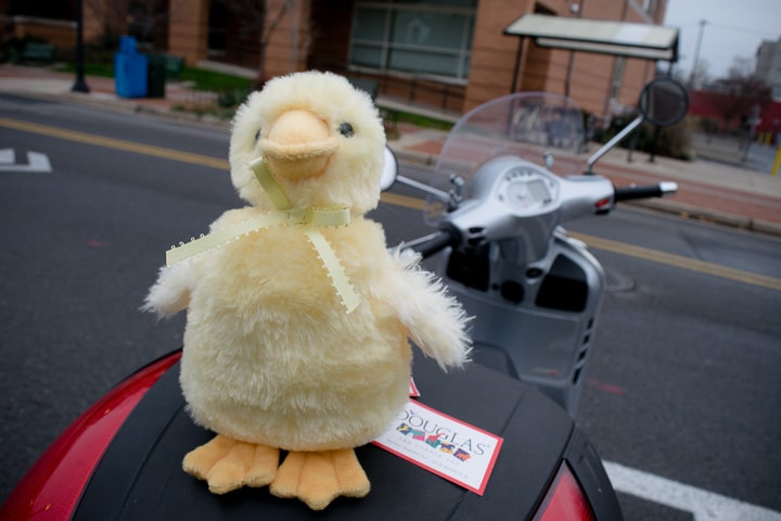 Stuffed toy duck on the back of a Vespa scooter