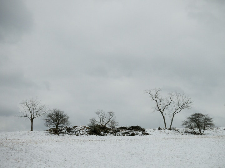 open field and trees on a snowy winter landscape