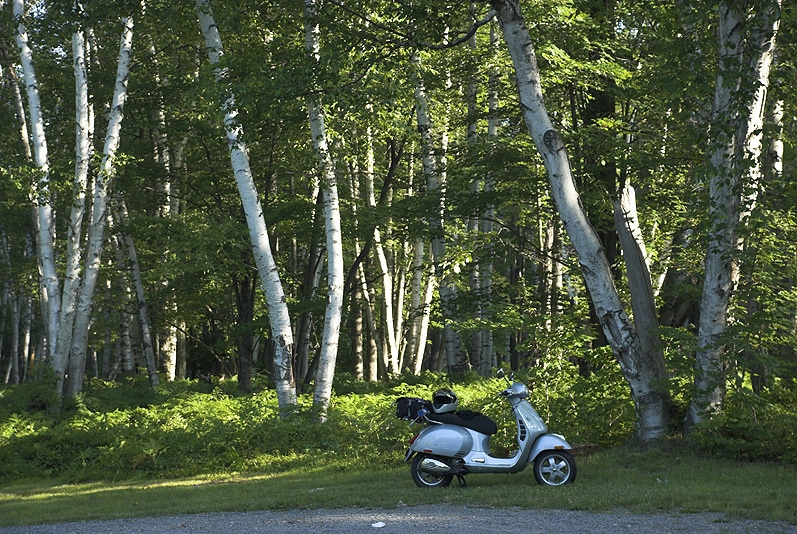Vespa GTS scooter and birch trees at Marion Brooks