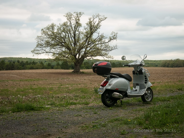 Vespa and farm tree