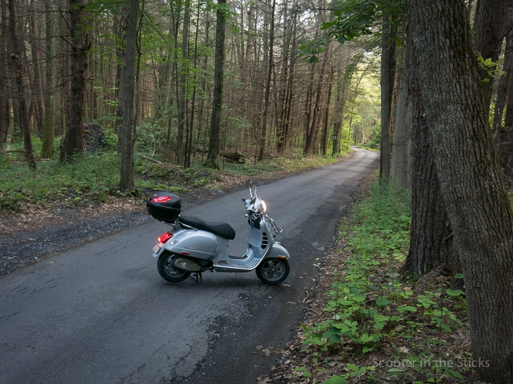 Vespa GTS scooter on a forest road