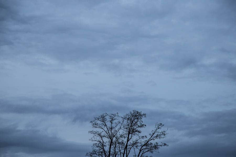 Tree tops against a darkening sky