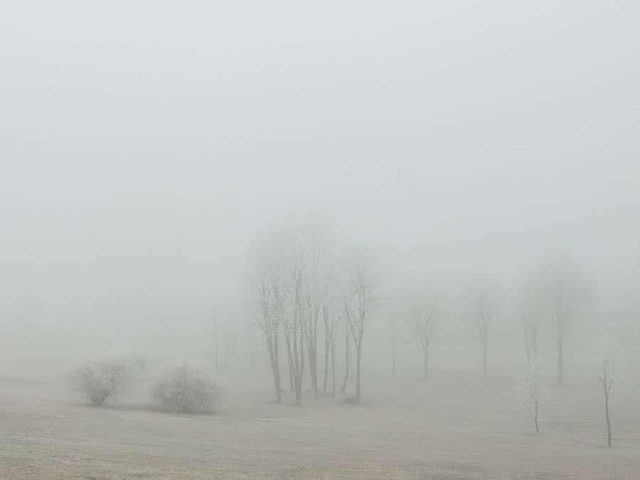 Trees shrouded in frozen fog