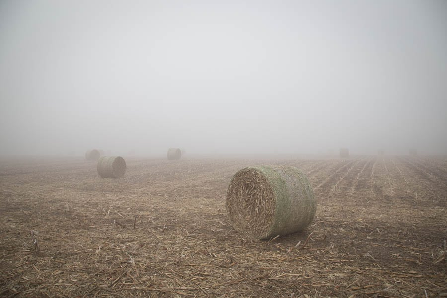 Round bales in the fog