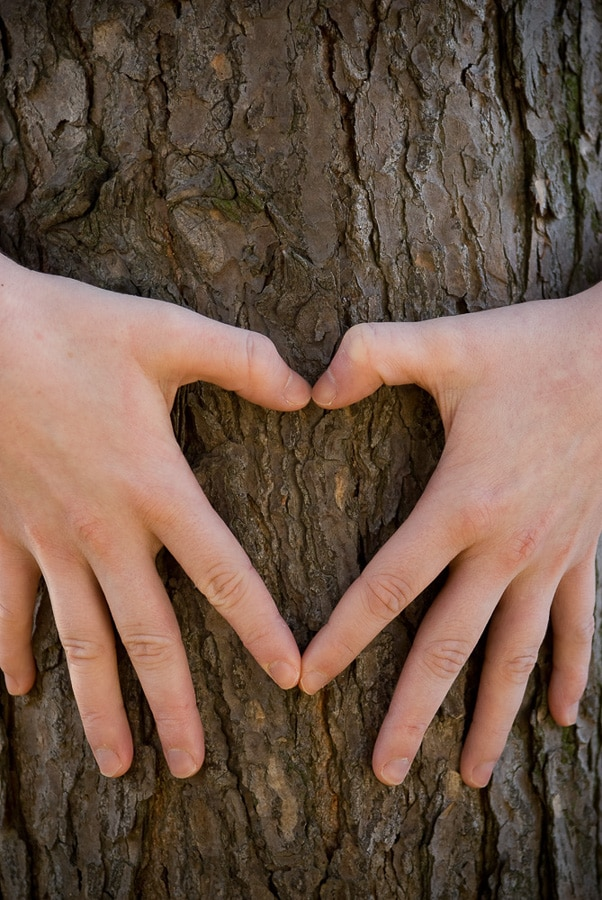 hands forming a heart on a tree