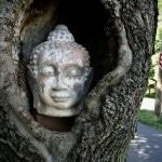 Vespa Meditation