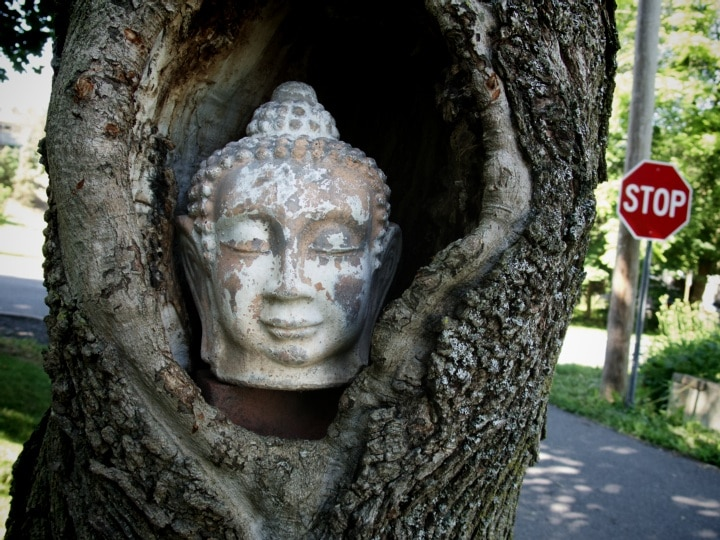 Buddha statue in a tree