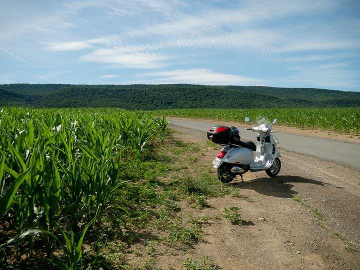 Vespa GTS scooter along side a cornfield
