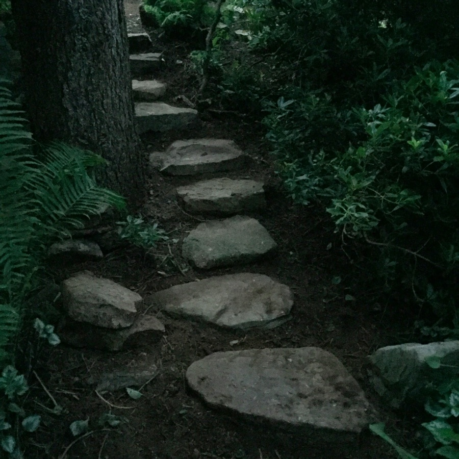 stone steps in naturalized garden