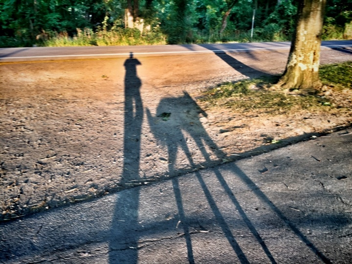 Shadows of the dog and I on a late day walk in the park