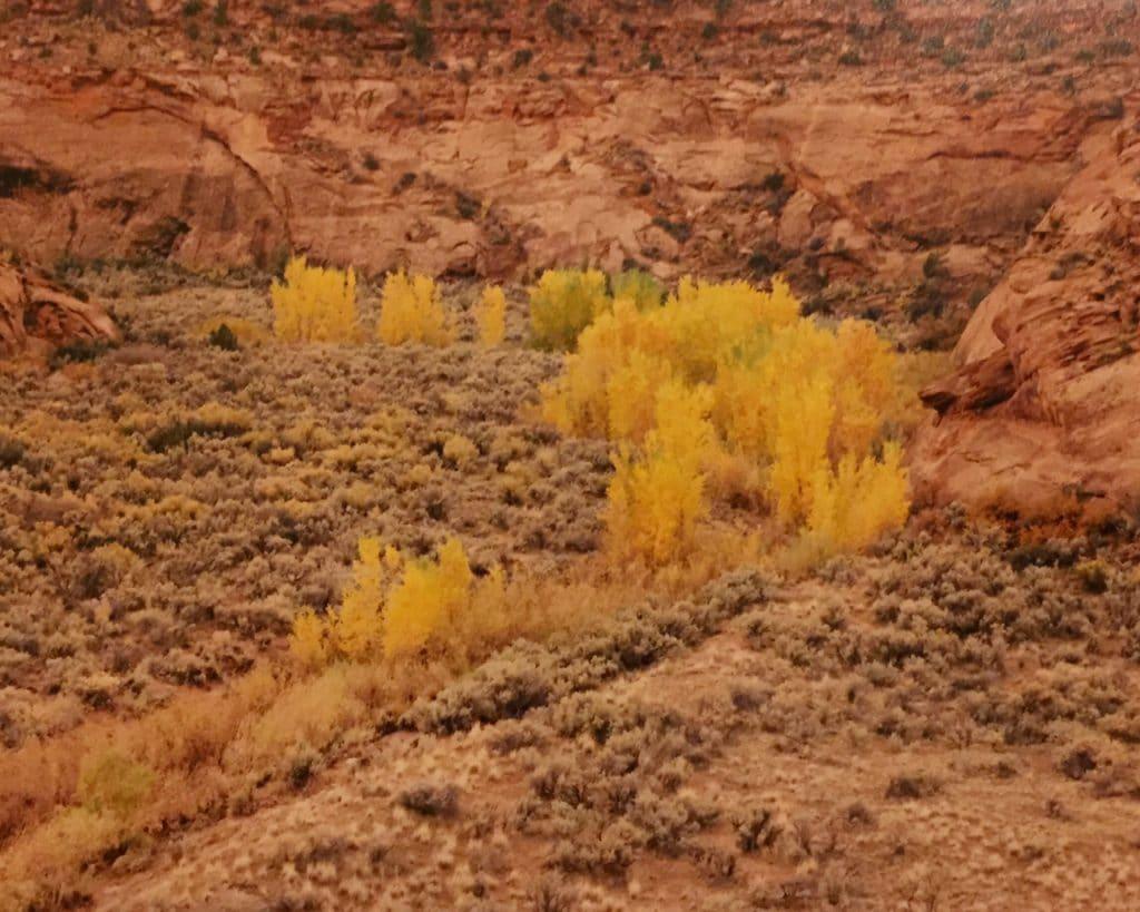 aspens in fall in Utah
