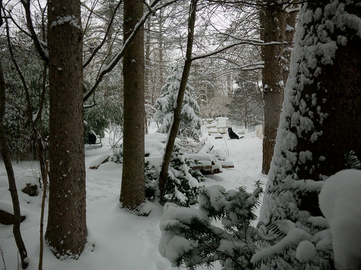 view of a snowy woodland garden