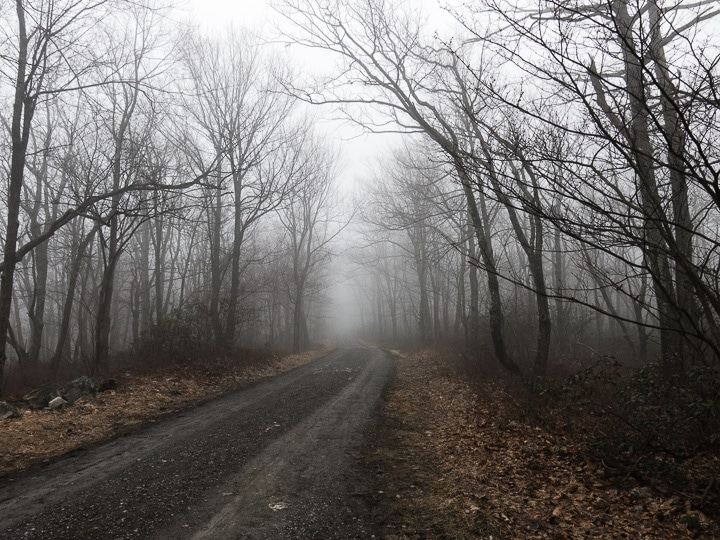Foggy forest road near Little Flat
