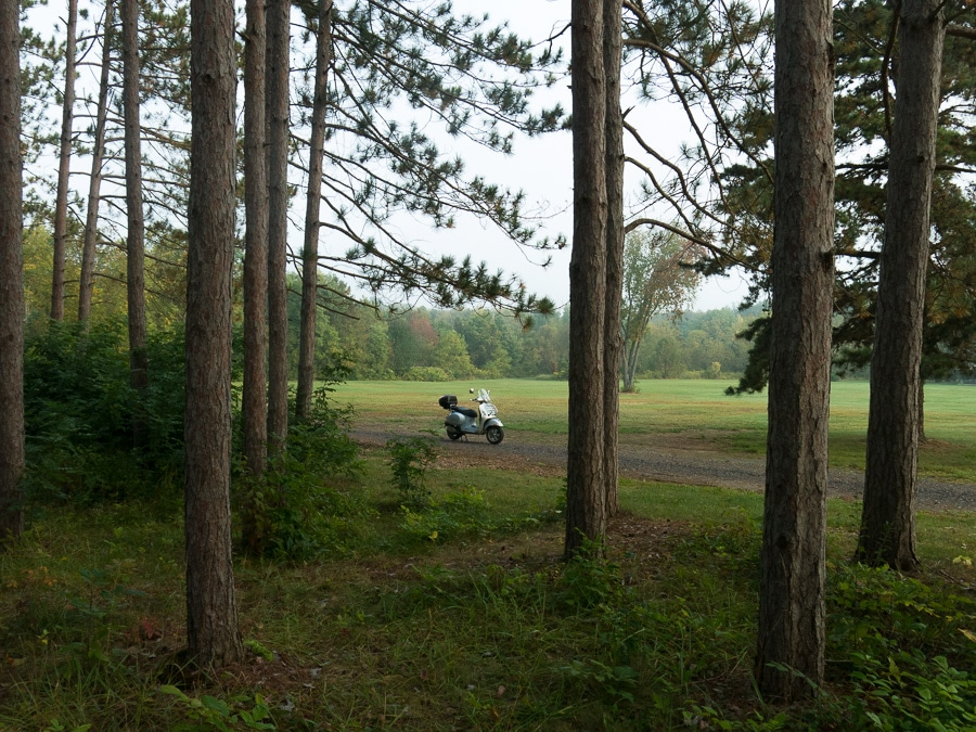 Vespa in wooded grove