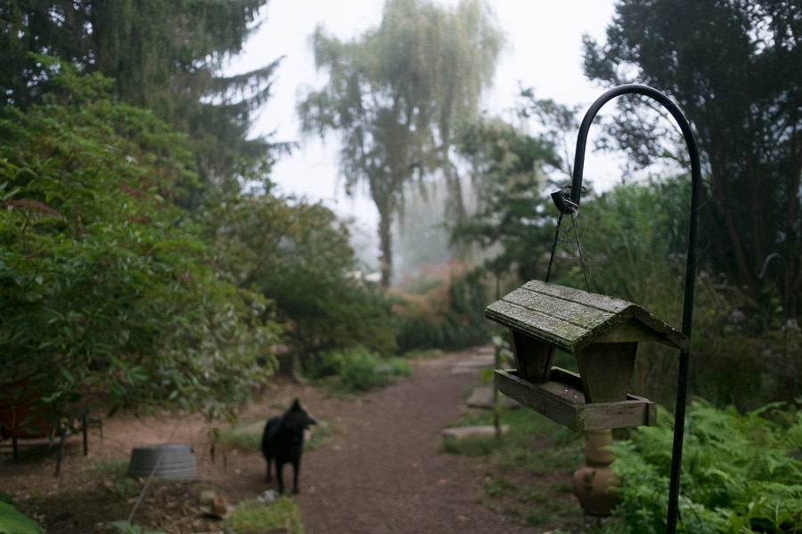Dog in a foggy garden