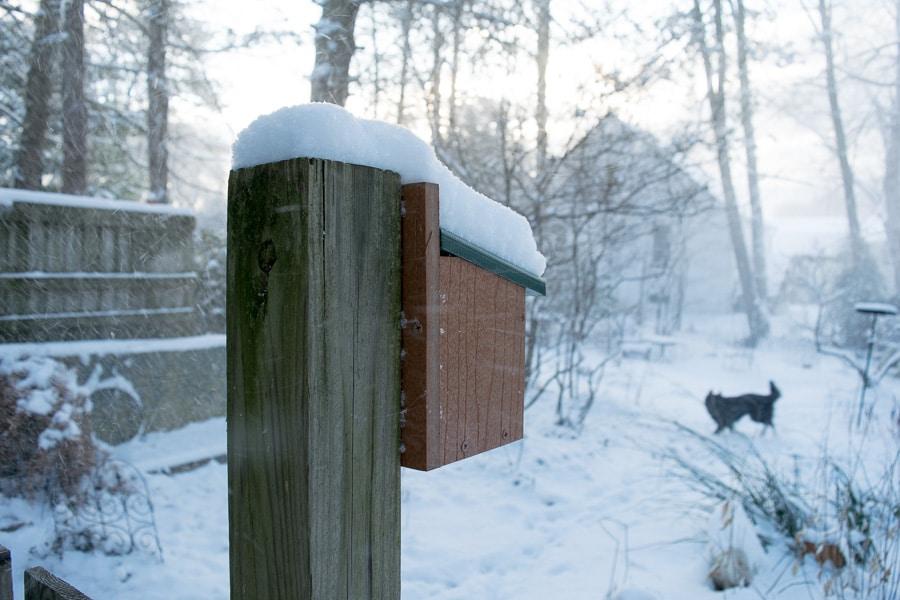 Frigid, snowy morning